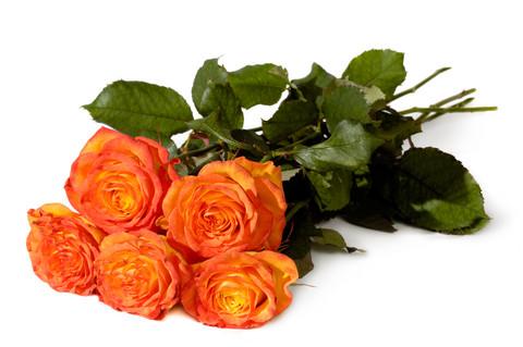 5 orange roses