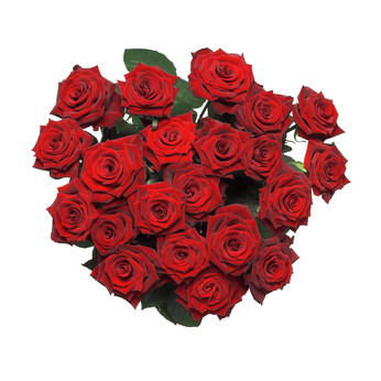 37 Red Roses